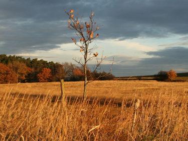 Herbstlandschaft_neu